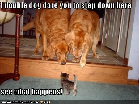 I double dog dare you to step down here  see what happens!