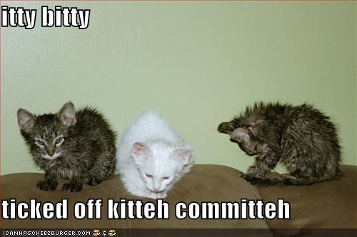 itty bitty  ticked off kitteh committeh