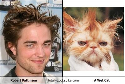 Robert Pattinson Totally Looks Like A Wet Cat