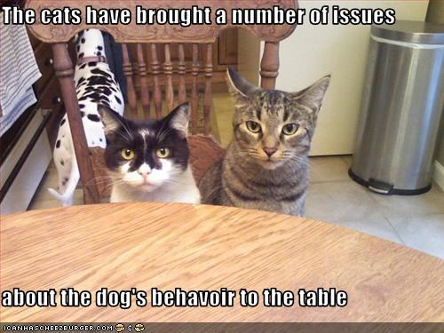 The cats have brought a number of issues  about the dog's behavoir to the table
