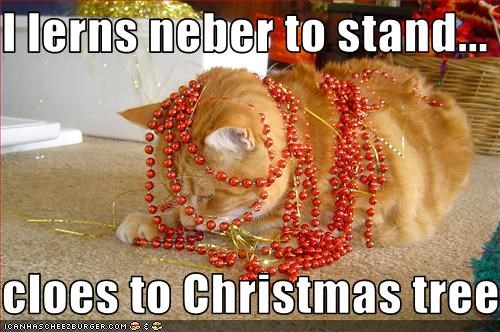 I lerns neber to stand...  cloes to Christmas tree...