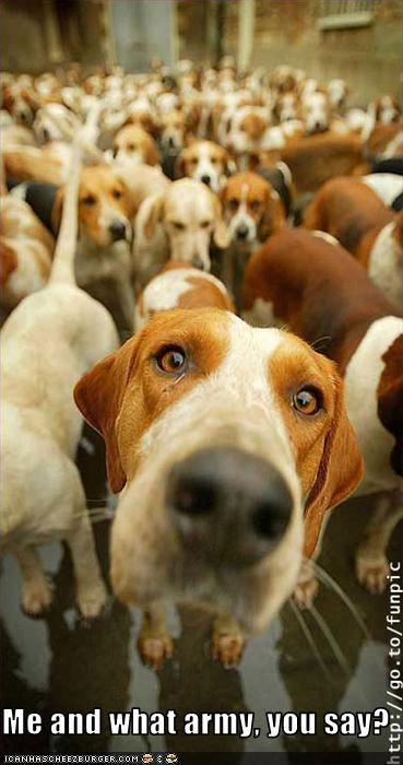 army,beagle,friends,threats