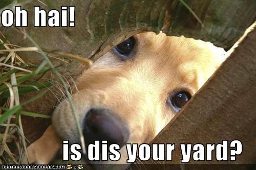 oh hai!  is dis your yard?
