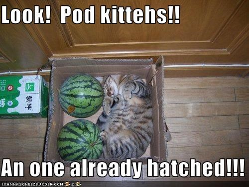 Look!  Pod kittehs!!  An one already hatched!!!