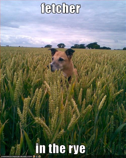 fetcher  in the rye