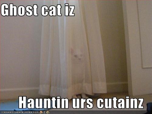 Ghost cat iz  Hauntin urs cutainz