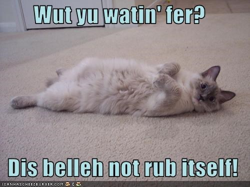 bellyrub,cute,lolcats,question