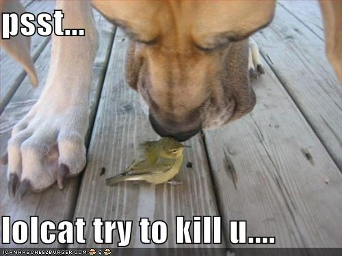 psst...  lolcat try to kill u....