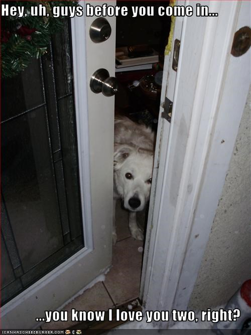 bad dog,door,guilty,love,whatbreed