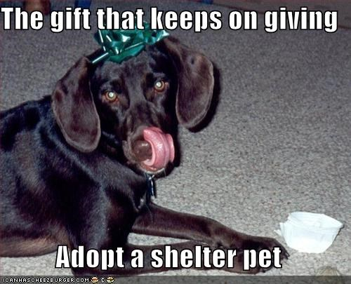 The gift that keeps on giving  Adopt a shelter pet