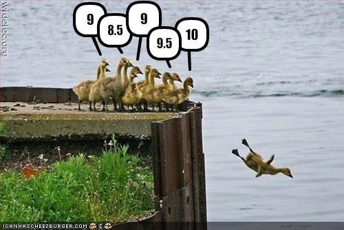 cute,diving,duck,lolducklings,lolducks,score,water