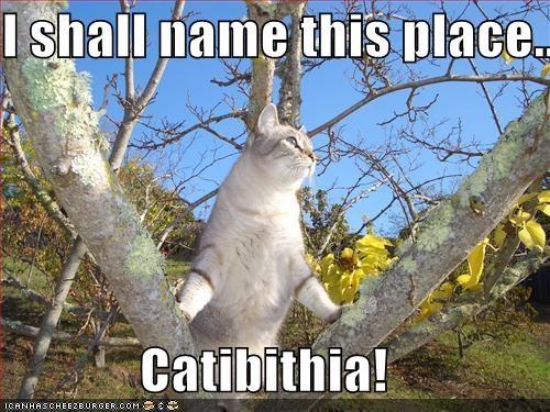 I shall name this place....  Catibithia!