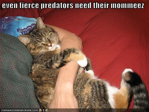 cute,fierce,lolcats,mommy,snuggles