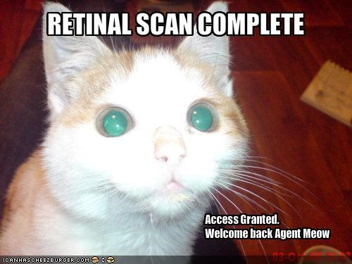 access,lolcats,scan,spy