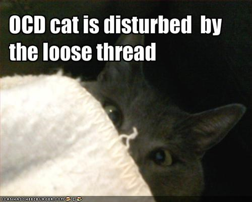 OCD cat is disturbed  by the loose thread