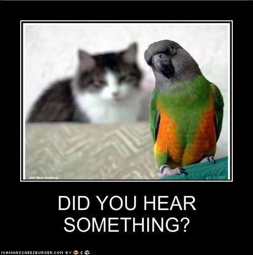 DID YOU HEAR SOMETHING?