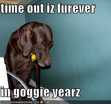 time out iz furever   in goggie yearz