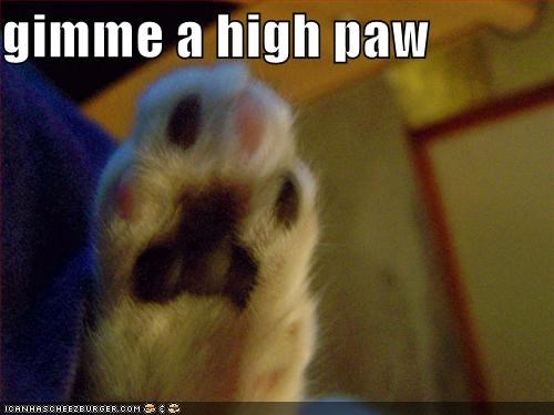 gimme a high paw