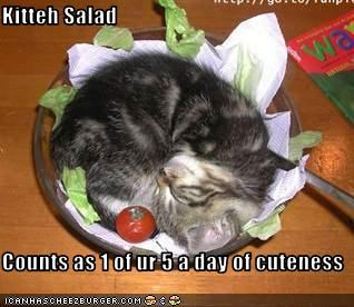 Kitteh Salad  Counts as 1 of ur 5 a day of cuteness