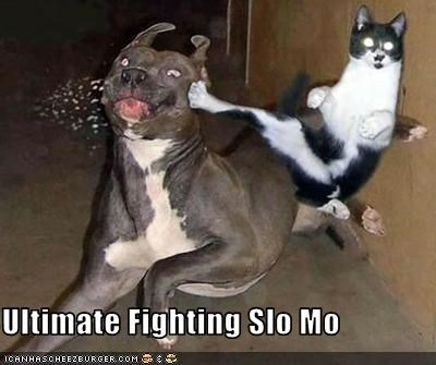 Ultimate Fighting Slo Mo