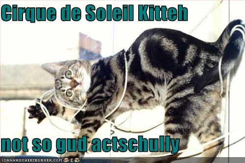 Cirque de Soleil Kitteh  not so gud actschully