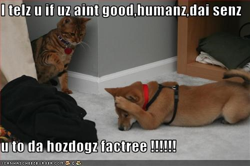 I telz u if uz aint good,humanz,dai senz  u to da hozdogz factree !!!!!!