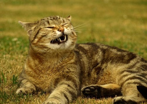 26 Cats That are Just...About..to SNEEZE!