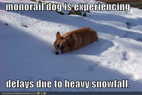 monorail dog is experiencing  delays due to heavy snowfall.
