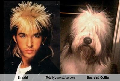 Limahl Totally Looks Like Bearded Collie