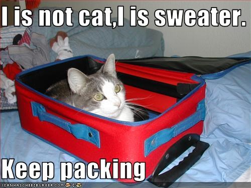 I is not cat,I is sweater.  Keep packing