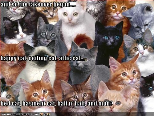 and so the takeover began..... happy cat, ceiling cat, attic cat... bed cat, basment cat, half n' half, and mud?