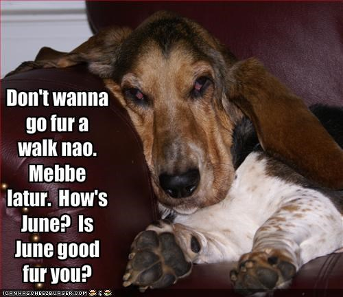 Don't wanna go fur a walk nao.  Mebbe latur.  How's June?  Is June good fur you?