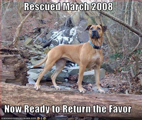 Rescued March 2008  Now Ready to Return the Favor