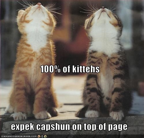 100% of kittehs expek capshun on top of page