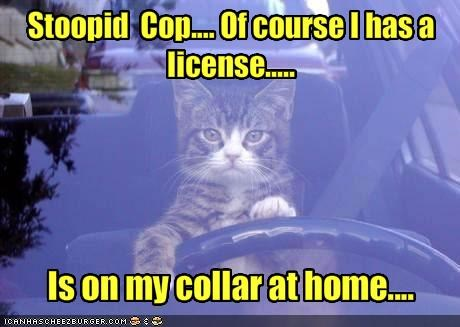 Stoopid  Cop.... Of course I has a license.....