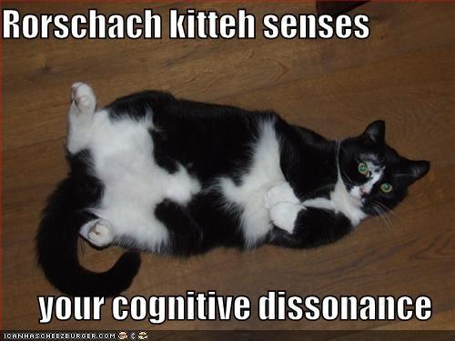 Cognitive dissonance cat