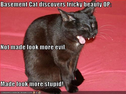 Basement Cat discovers tricky beauty OP: Not made look more evil.  Made look more stupid!