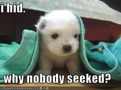 covered,hidden,hide and seek,hiding,Sad,towel,whatbreed