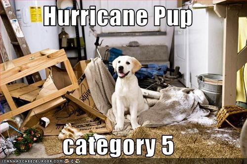 Hurricane Pup  category 5