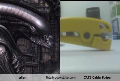 alien Totally Looks Like CAT5 Cable Striper