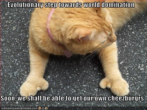 cheezburgers,evolution,ginger,lolcats,plotting,thumbs,world domination