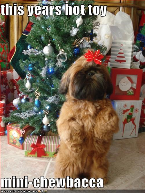 chewbacca,christmas,havanese,look a like,present,toy