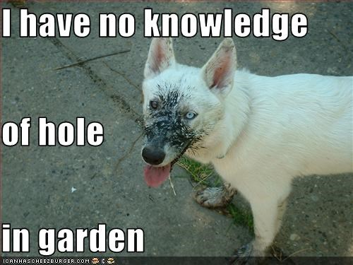 I have no knowledge of hole in garden