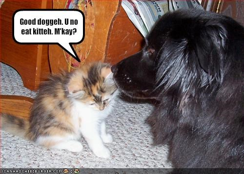 Good doggeh. U no eat kitteh. M'kay?
