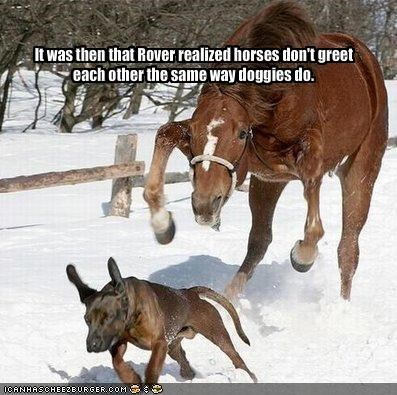 It was then that Rover realized horses don't greet each other the same way doggies do.