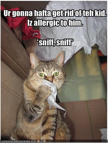 Ur gonna hafta get rid of teh kid. Iz allergic to him. *sniff, sniff*