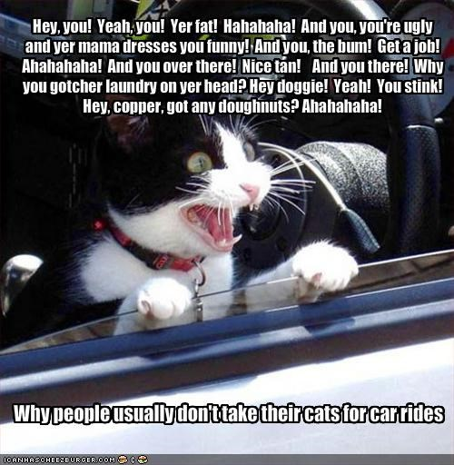 Why people usually don't take their cats for car rides