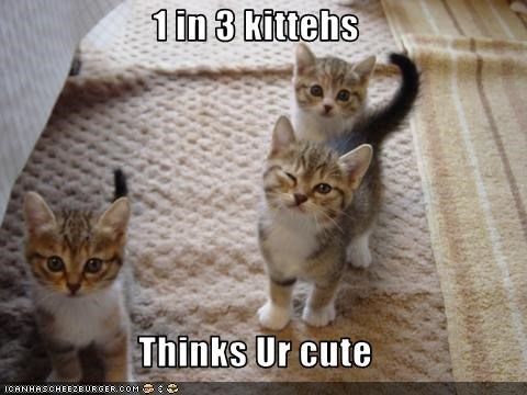 1 in 3 kittehs  Thinks Ur cute