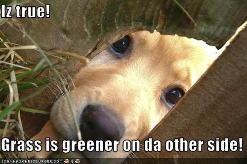 Iz true!  Grass is greener on da other side!