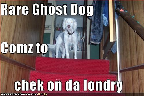 Rare Ghost Dog Comz to chek on da londry